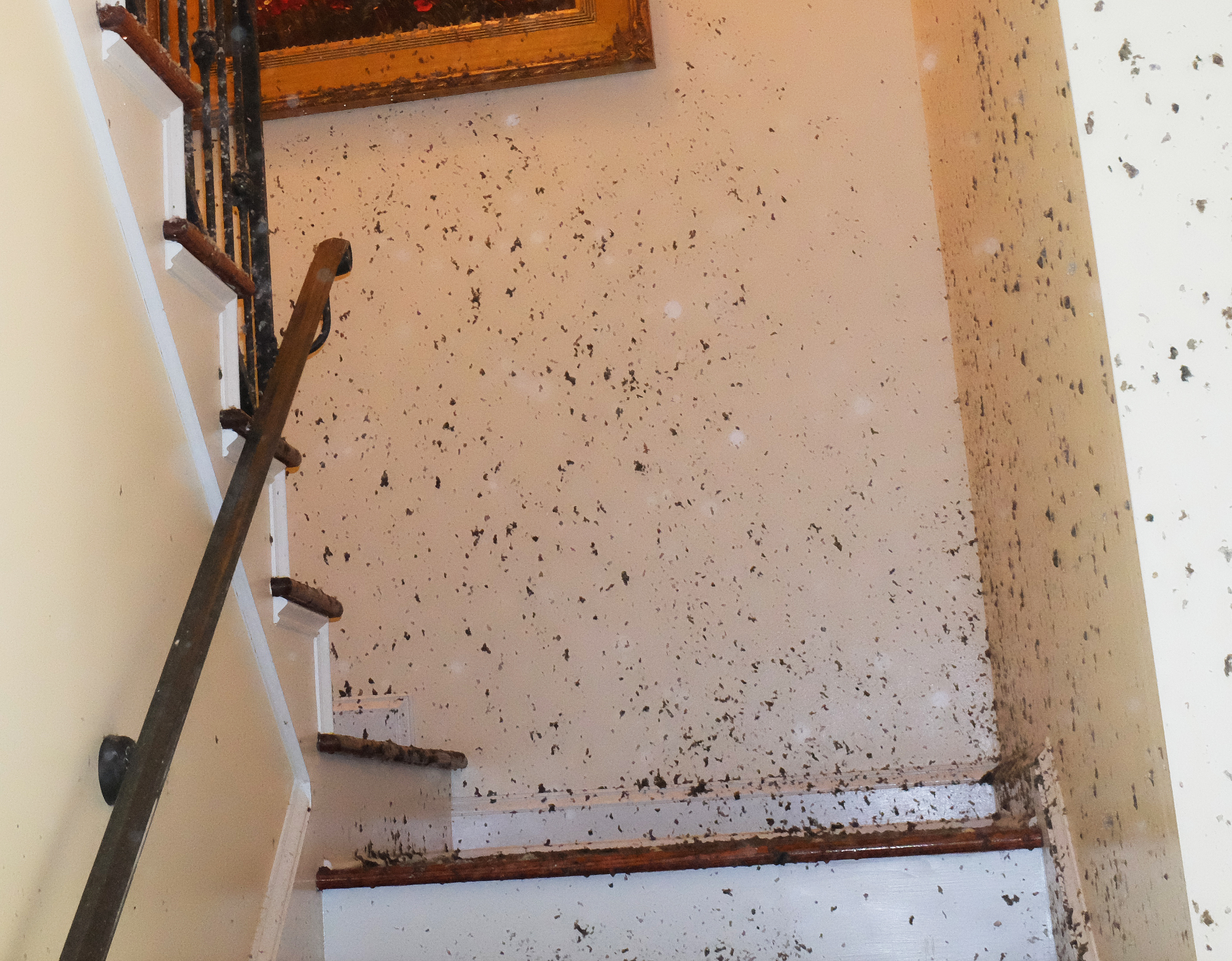 Is it mold do i need a certified mold remediation specialist gulf coast of alabama
